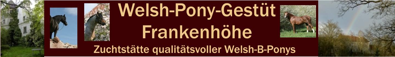 Welsh Pony Züchterin