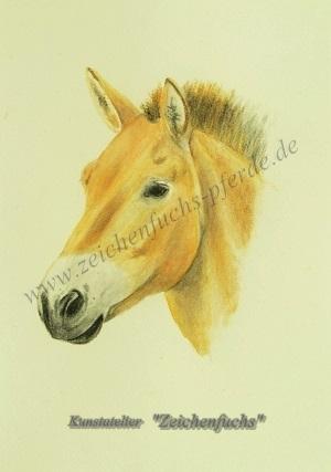 Portrait eines Przewalski-Pferdes