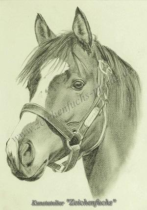 Portrait vom Englischen Vollblut