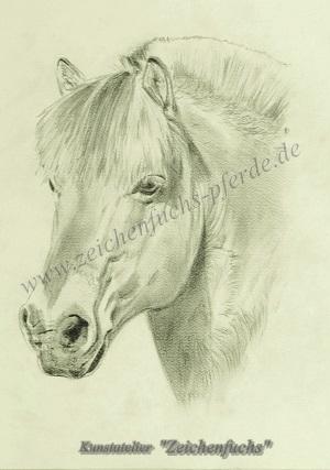Bleistiftzeichnung eines Fjordpferdes