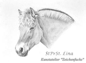 Bleistiftportrait des Fjordpferdes Lina