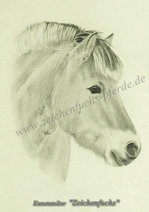 Bleistiftportrait eines Fjordpferdes