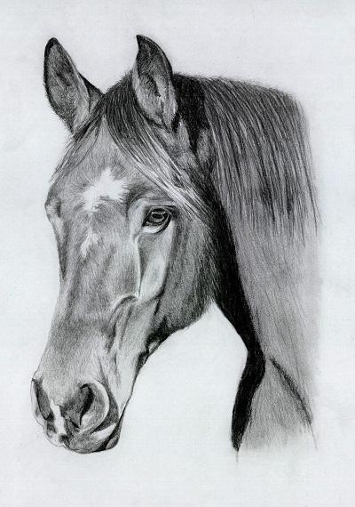 Bleistiftzeichnung eines Freibergers
