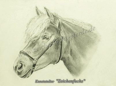 Bleistiftzeichnung vom Haflinger