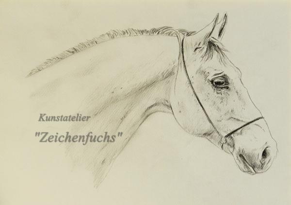 Pferd mit Bleistift zeichnen lassen