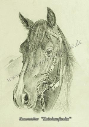 Bleistiftzeichnung vom Mustang