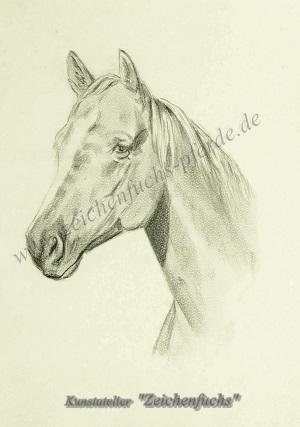 Portrait eines Quarter Horse