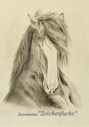 Bleistiftzeichnung eines Shire Horse