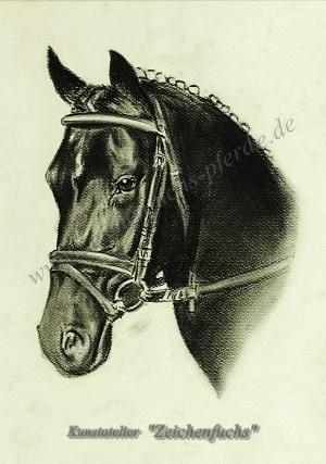 Portrait vom Deutschen Reitpony