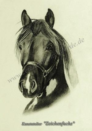 Portrait eines Lewitzers