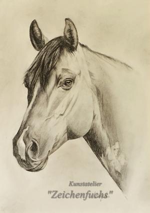 Kohleportrait eines Quarter Horse
