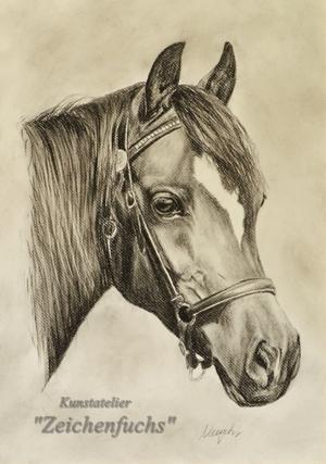 Kohleportrait eines Welsh Ponys