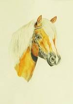 Pferdeportrait eines Haflingers