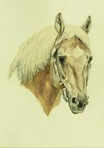 Quarterhorse Aquarellportrait