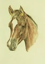 Pferdeportrait vom Araber