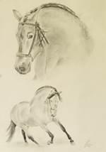 Bleistiftportrait eines Andalusiers