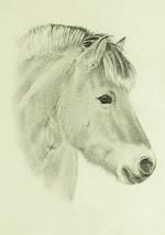 Bleistiftportrait vom Fjordpferd
