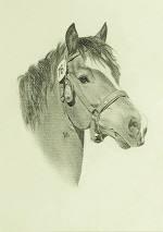 Pferdeportrait vom Freiberger