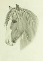 Pferdezeichnung vom Tinker