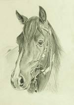 Portrait vom Mustang