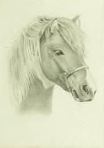 Beispielportrait eines Pferdes