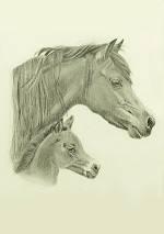 Pferdezeichnung vom Welsh Pony