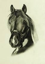 Portrait vom Lewitzer
