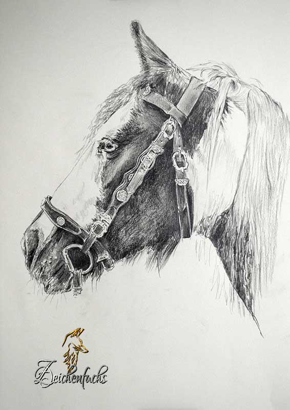 Bleistiftzeichnung eines Pferdes im Profil