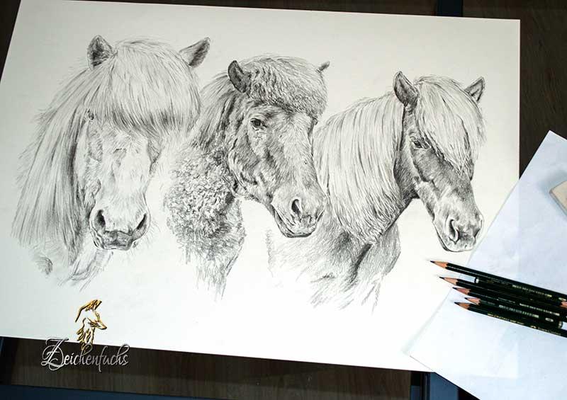 Bleistiftzeichnung Islandpferde