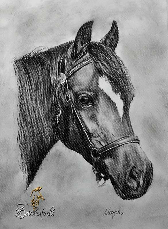 Pferdeportrait Kohlezeichnung