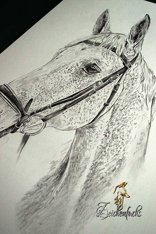 Bleistiftzeichnung eines Schimmels